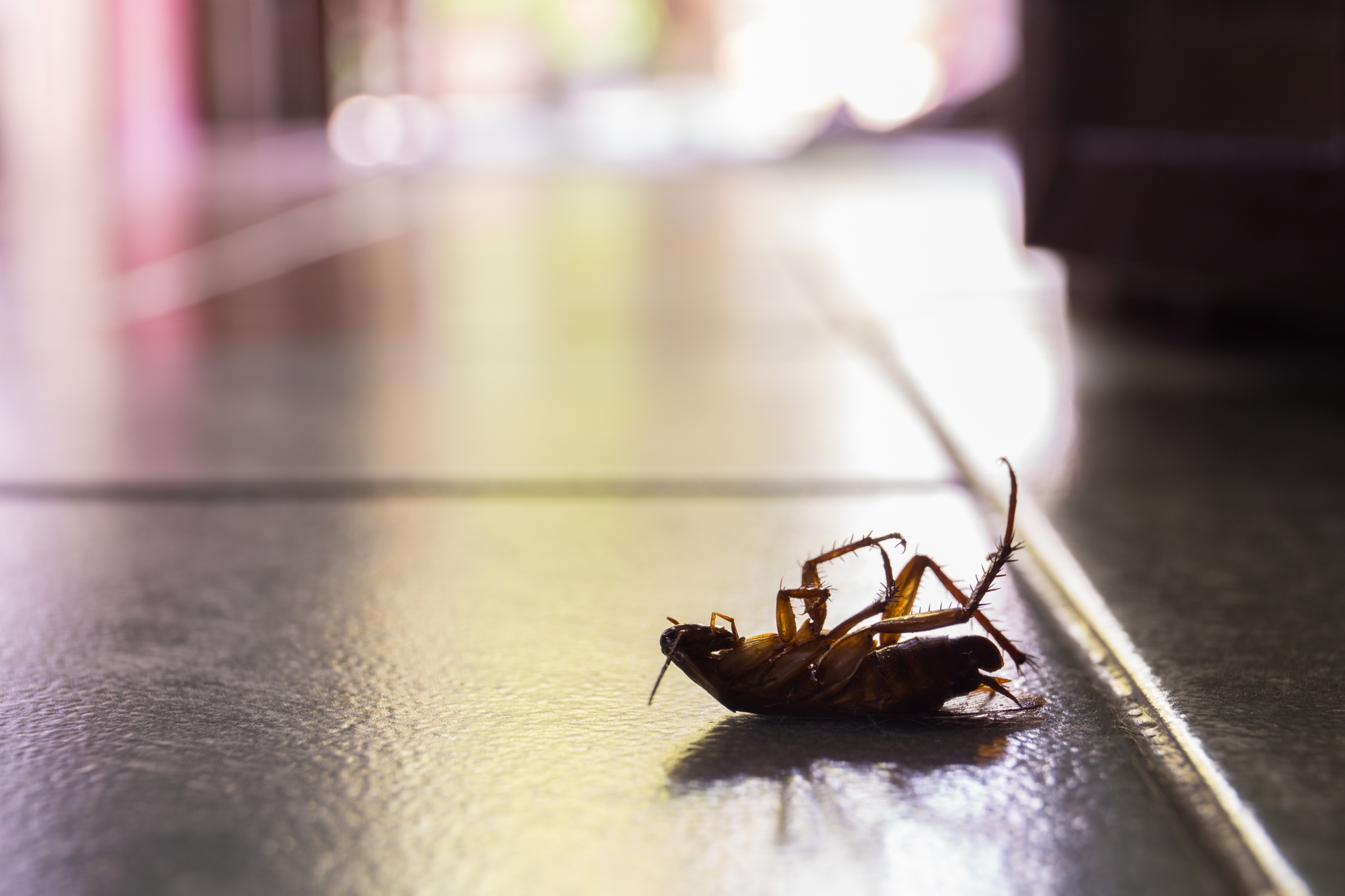 Cockroach Control, Pest Control in Battersea, SW11 . Call Now 020 8166 9746