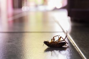 Electronic Pest Control, Pest Control in Battersea, SW11 . Call Now 020 8166 9746